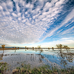 [WEBINAR] Navigating California's New Regulations for Wetlands and State Waters